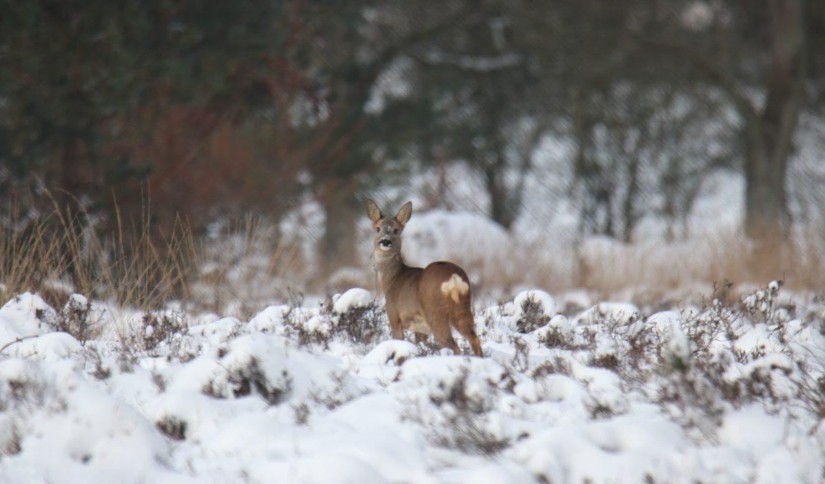 winterse natuur